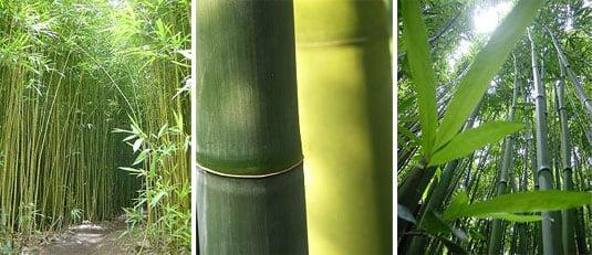 Haiku Designs Bamboo Furniture