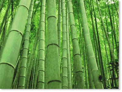 Our Favorite Bamboo
