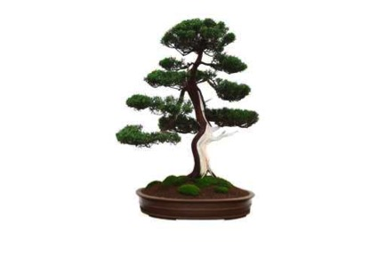 Haiku Designs Bonsai Tree